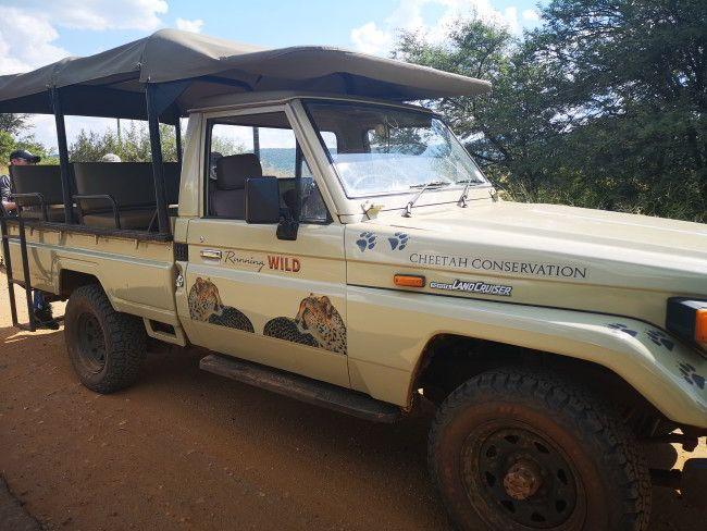 Als Volunteer im Running Wild Cheetah Conservation Jeep beim Gepardenprojekt - Erfahrungsbericht und Infos