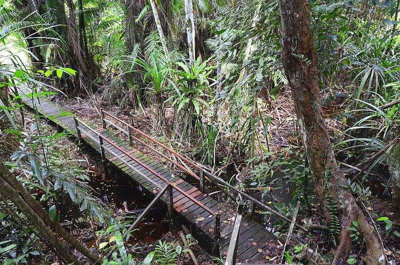 Dschungelpfad Bako Nationalpark