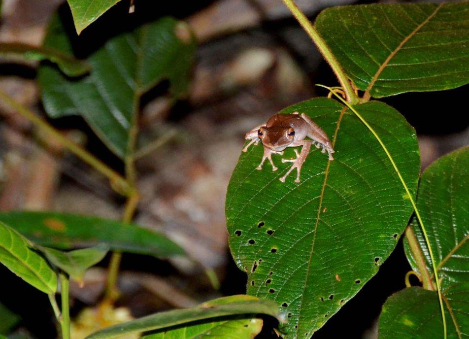 Frosch Nachtwanderung
