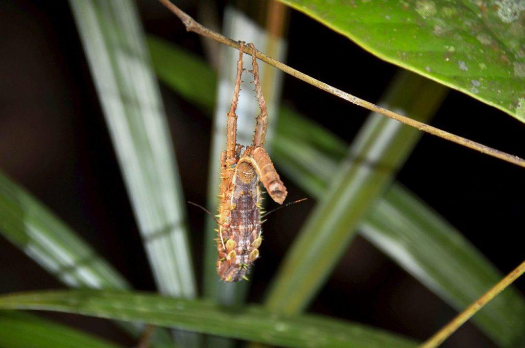 Insekt Nachtwanderung