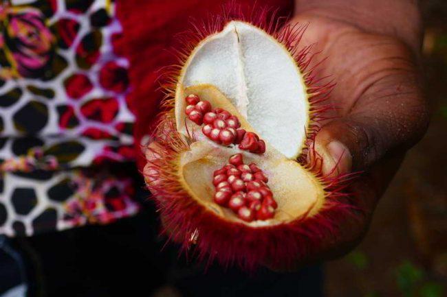 Lippenstiftfrucht