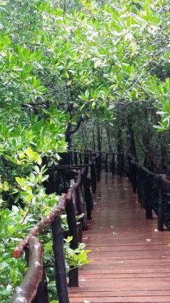 Brücke über Mangroven
