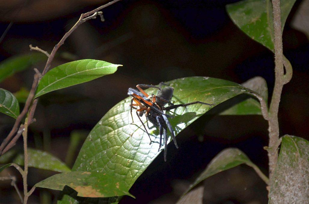 Spinne Nachtwanderung