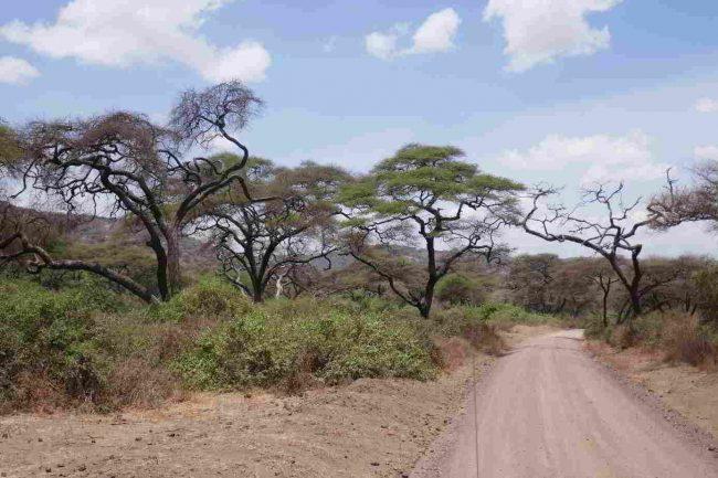 Straße Manyara